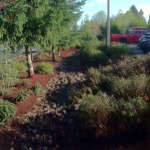 Lynnwood city public works bark beds trees shrubs drainage
