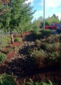 lynnwood city operations bark drainage trees shrubs public works project landscape improvement
