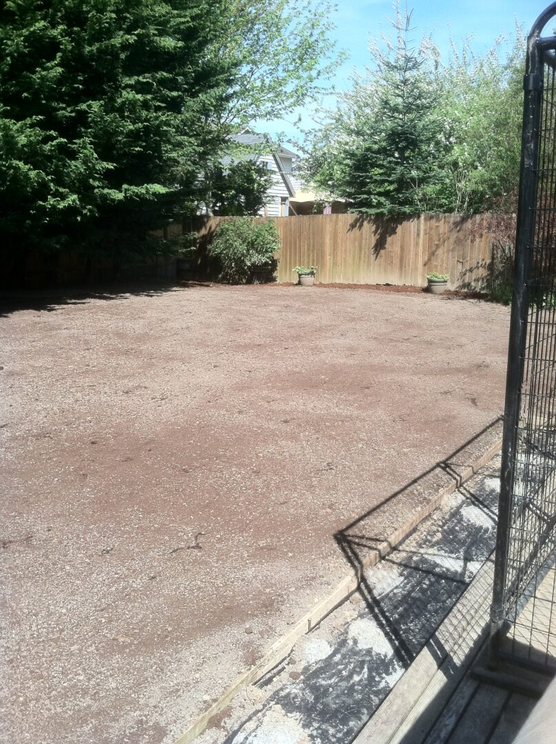 Base of new lawn after handseeding