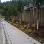 street improvement landscaping city of duvall native plants sidewalk