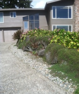 replace old overgrown rockery ground cover landscape improvement driveway expansion