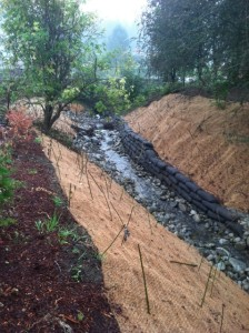 willow branches establish root growth stabilize stream bed creek restoration woodinville commercial property landscape upgrade