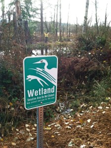 buckley wetland buffer enhancement native invasive species natural ecological landscape