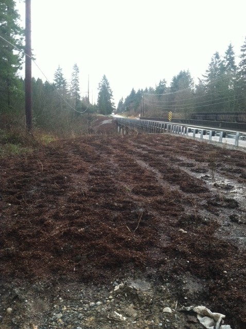 dakota creek blaine road restoration I5 seismic retrofit rushes sedges planting trees erosion mackay landscape services