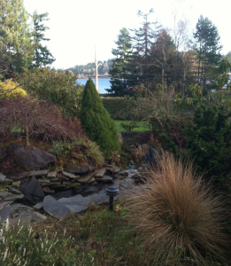 pond plantings trees grown out lake sammamish redmond custom built pond lasting