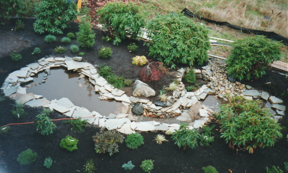 aerial pond stream installation native plant beds