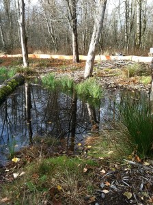 wetland reeds native plants deter invasive species pond buckely trees