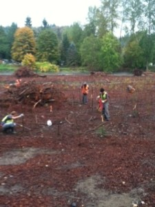 mackay landscape services wetland installation creation augmentation king county elliott reach 520 construction mitigation project