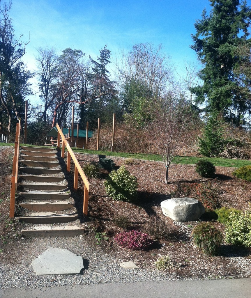 mackay landscape services commercial property upgrade lakeside milam burien
