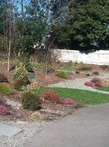 lakeside milam burien campus grounds upgrade one year later mackay landscape services commercial property